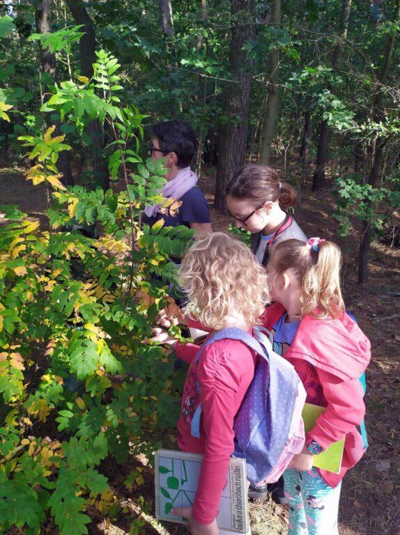 Natura uważna WDK Uhowo-2020-6-warsztaty-zielarskie